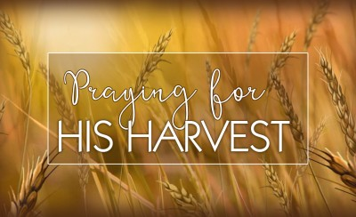 Praying For His Harvest