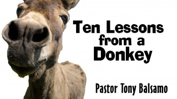 Ten Lessons from a Donkey